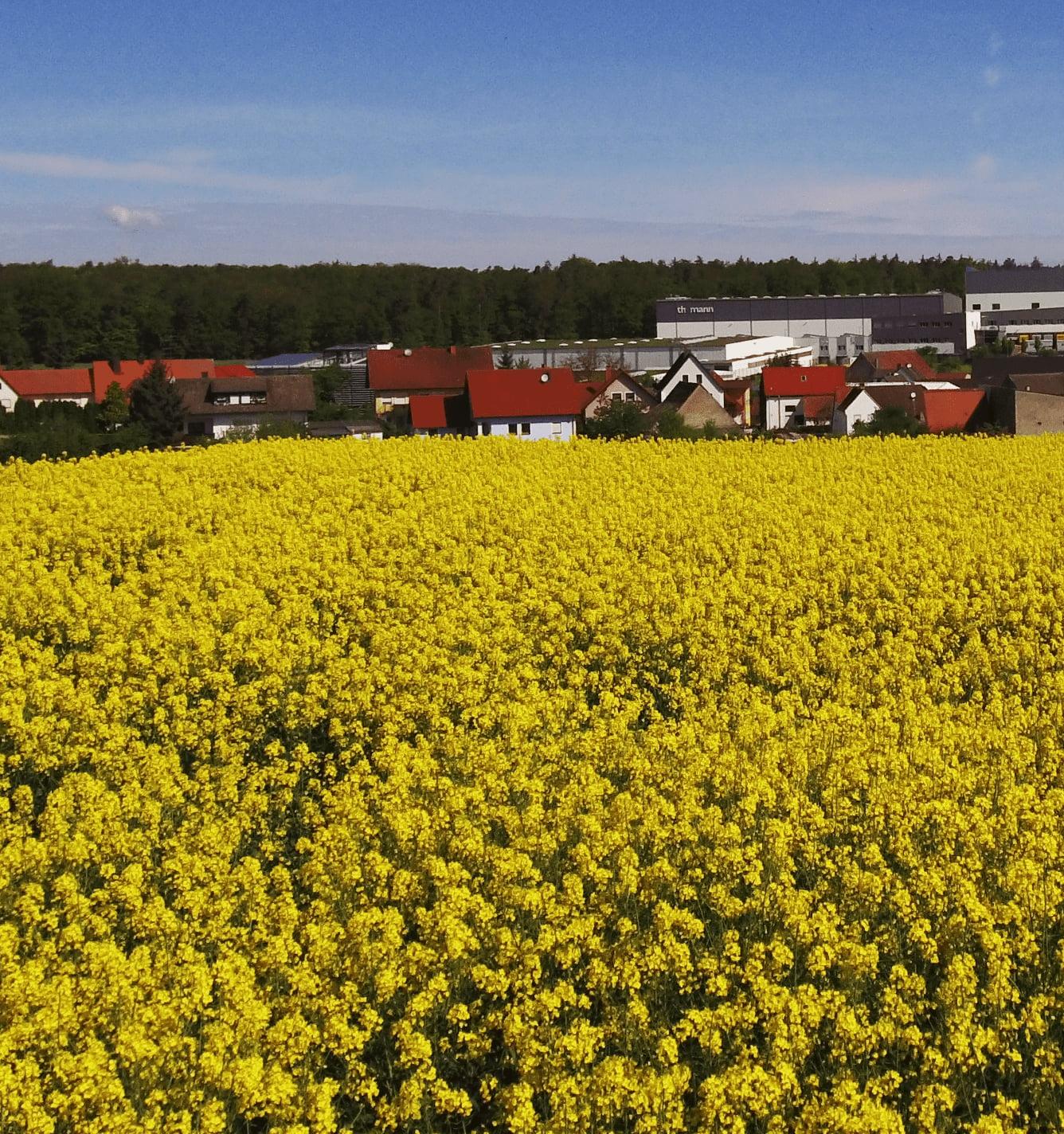 treppendorf field of flowers